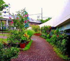 ■ My field Garden