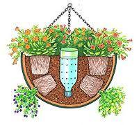 Hanging Basket   Google Search