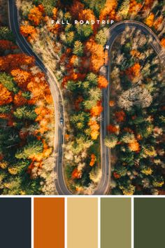 Design Tip: You don't need lots of colors to make a huge impact! Using different hues of two colors help bring depth and give the illusion of a more expansive palette. #green #orange #fall #autumn #color #colour #palette #leaves #season #inspiration #september #october #roadtrip #ideas #design #designer #brand #branding #logo #logomaker #DIY #lookadesign Fall Color Palette, Color Palettes, Logo Maker, Trendy Colors, Green And Orange, Color Inspiration, Illusions, Favorite Color, Color Schemes