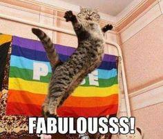 Homosexual Cat