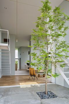 A beautiful tree brings this open plan space to life.