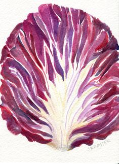 Radicchio watercolors painting original That's by SharonFosterArt