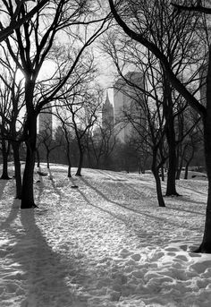 Bucket list, photography in Central park