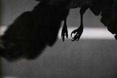 Masahisa Fukase - The Solitude of Ravens, 1970s-1980s (Koen-dori district of Tokyo, 1982)