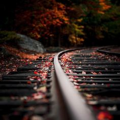 Check out this fine nature photography art! Autumn Photography, Creative Photography, Amazing Photography, Art Photography, Beautiful Landscape Photography, Photo Background Images, Photo Backgrounds, Pinterest Photography, Beautiful Nature Wallpaper