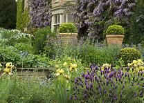 Ancient wisterias cover the sixteenth century façade of the house and dreamy borders are planted around the house at Norborough Hall Gardens.
