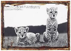 Luxury branding and storytelling: How Cartier crafted the cheetah. Photo @Peter Beard