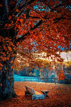 an old soul gathering inspiration as I find my way to only.lover of nature, photography and whatever. Fall Pictures, Nature Pictures, Pretty Pictures, Beautiful World, Beautiful Images, Autumn Scenes, Seasons Of The Year, Parcs, Autumn Leaves