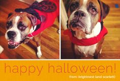 For pets, Halloween can be a night fraught with mounds of dark chocolate, hot candles and a sudden increase of strange visitors. Make sure your pet stays calm and safe this All Hallows' Eve by paying attention to these potential hazards!
