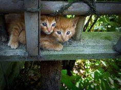 古都・京都にくらす猫たち Cats living in Kyoto.