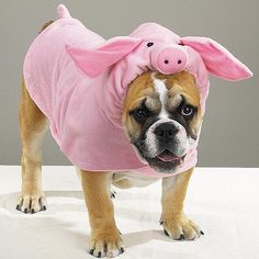 Piggy pup!