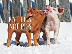 "I've let myself live in the ""ignorance is bliss"" for long enough. Pigs have the intellectual level of a 3 year old child, yet I would never eat a dog. What's the difference? The pig is smarter; shows love, can do ""tricks""(including play video games)."