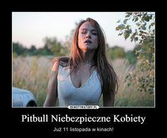 Pitbull Niebezpieczne Kobiety – Już 11 listopada w kinach!