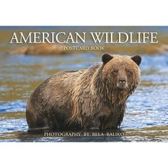 American Wildlife Postcard Book: Polar bear, grizzly and black bear, wolf, elk, moose, whitetailed and mule deer-these and others are featured here from Master Photographer Bela Baliko's wild animal portrait files.  Truly, Bela does justice to these wonderful and often elusive wild animals.  http://www.calendars.com/Wildlife/American-Wildlife-Postcard-Book/prod201300007180/?categoryId=cat00347=cat00347