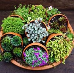 LOVE this display of succulents with Terra cotte pots lying down on a large Terra cotte pot tray!! Going to make one!!