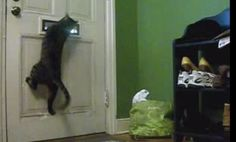 Funny Cat Steals the Mail (Video) - I had a cat who used to wait for the mail to come in through the slot too, but she'd sit and let the mail bonk her on the head rather than leap for it. ;D (@Sara and @Michelle Valadez you'd both like this)