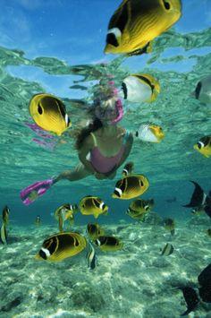 fish snorkeling hawaii Butterflyfish