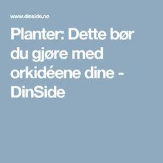Planter: Dette bør du gjøre med orkidéene dine - DinSide