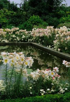 Pond  surrounded by flowers