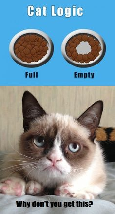 "Grumpy Cat Logic - NOW I get it!!!!  Kiki is always leading me to her dish, & I say, ""There is still food in your dish!!!!!""  LOL"