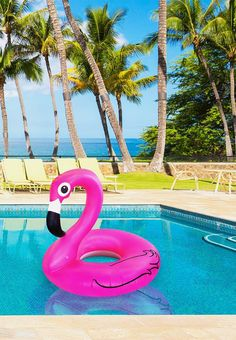 Giant Pink Flamingo Pool Float and more Strange Gifts at Perpetual Kid. Our absolutely divine Giant Pink Flamingo Pool Float! Pink Flamingo Float, Flamingo Rosa, Flamingo Party, Pink Flamingos, Beach Toys, My Pool, Pool Fun, Summer Pool, Summer Fun