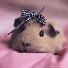 Cute Hamster :)