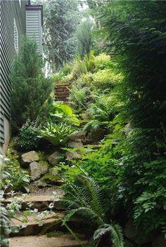Rustic garden design.  Native Plants, Rustic Steps, Rocks, Evergreens
