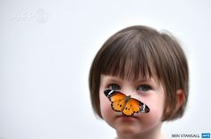 UNITED KINGDOM, London : A Tiger butterfly sits on the nose of a child during a photocall in the Natural History Museum's 'Sensational  Butterflies' outdoor butterfly house in London on March 31, 2015. AFP  PHOTO / BEN STANSALL