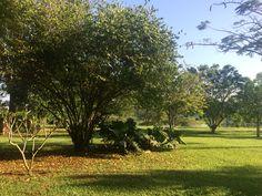 The tropical garden at Holland Park.