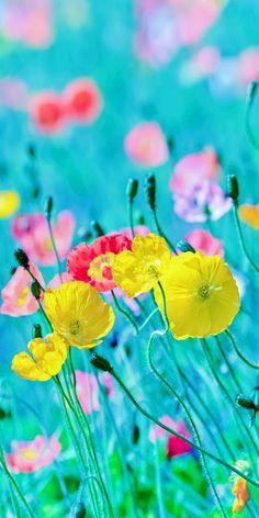 Poppies ❣