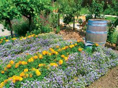 Zbavte sa vošiek bez chémie | Záhrada.sk Permaculture, Plants, Gardening, Ideas, Chemistry, Lawn And Garden, Flora, Plant, Horticulture