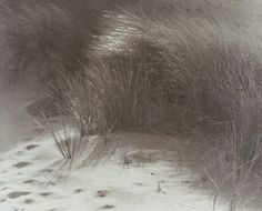 Beach Grass, William E. Dassonville, c. 1920, Gelatin silver print, 8 x 9 15/16 in.