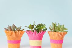 These diy crepe paper wrapped succulent pots are so easy to make it only takes min!