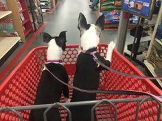 Thelma & Louis on their first shopping trip!!
