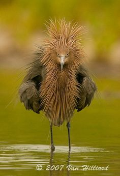 This Pin was discovered by Connie May. Discover (and save!) your own Pins on Pinterest. | See more about birds, hair and mornings.