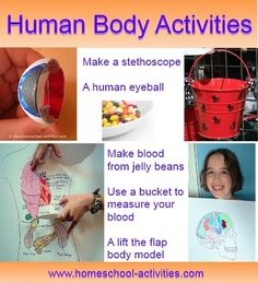 Free e-book: ten #science #experiments that won't let you down!  Make an eyeball and have fun with #human #body activities for kids - see more in the book. www.homeschool-activities.com/kids-science-experiments.html