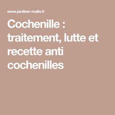 Cochenille : traitement, lutte et recette anti cochenilles