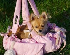 Weiteres - L'oro mobile Hundetasche - Bettchen /Bonbon - ein Designerstück von LoroHundetaschen bei DaWanda