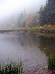 Fog and Fall colors near the Tarn in Acadia NP, Maine
