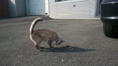 GEVONDEN in ROESELARE !!! (centrum - Gaaipersstraat) 27.09 2O013 Het gaat om een jong BLIND katje dat een BLAUW HALSBANDJE draagt. Herkent u het katje, neem dan aub zo spoedig mogelijk contact op met de persoon die een zoekertje plaatsten via een van deze 2 site-links !!!  http://www.kattensite.be/onderwerp/51234-jonge-blinde-kat-gevonden-in-roeselare-centrum/ http://www.kattensite.be/onderwerp/51234-jonge-blinde-kat-gevo… Poezen Vermist of Gevonden in West-Vlaanderen