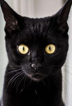 https://flic.kr/p/x8TGHL | Polly, the Black Cat