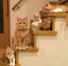 Die 18 stolzesten Katzenmütter der Welt. Nr. 3 bringt Dich zum kreischen. | LikeMag | We like to entertain you