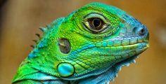 reptielen - Google zoeken