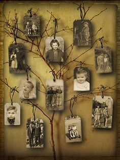 Hang class family pictures from branches.