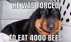 Stupid Memes, Dogs, Animals, Animales, Animaux, Pet Dogs, Doggies, Animal, Animais