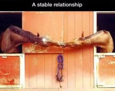 A Stable Relationship love cute kiss animals adorable horses animal horse funny animals