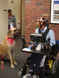 Honey, the Great Dane therapy dog  i miss my great dane, she looked the way honey does...wow!