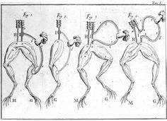 Historical experiments on frog nerves