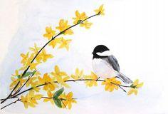 chickadee on forsythia sprig ~*~ (art, watercolor)