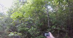 Man Captures Rock Thrown By Bigfoot On Video